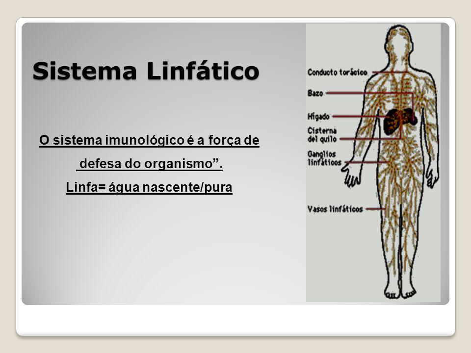 Sistema Linfático O sistema imunológico é a força de defesa do organismo. Linfa= água nascente/pura
