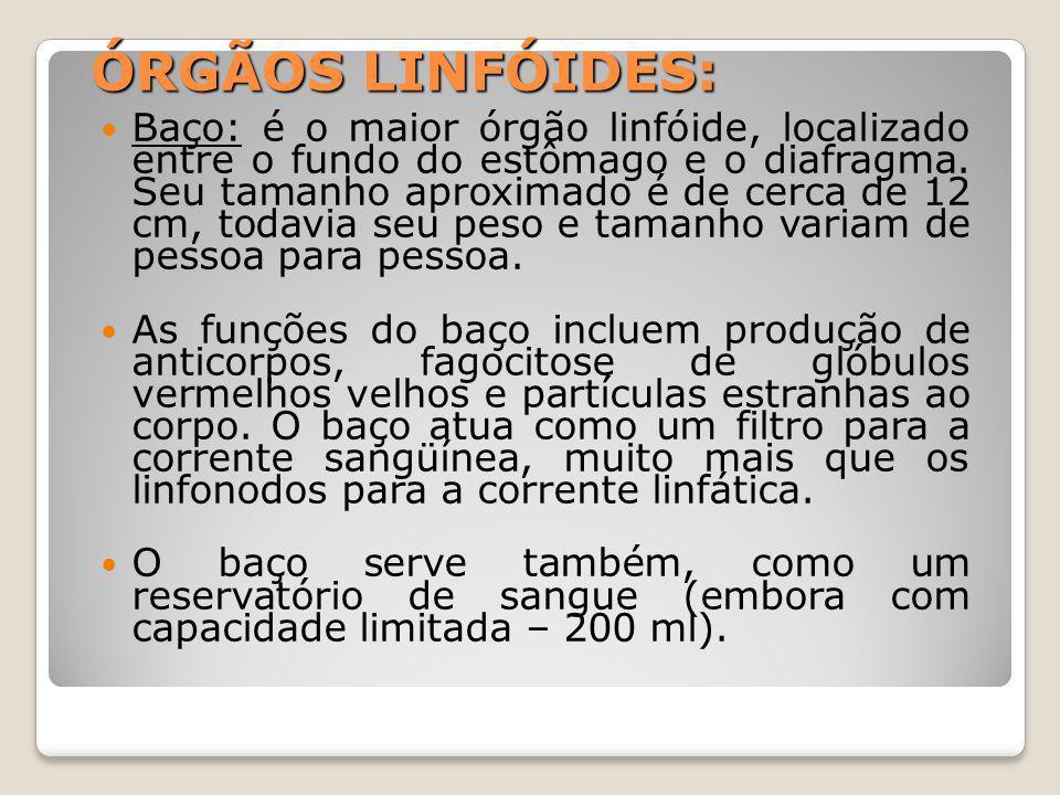 ÓRGÃOS LINFÓIDES: Baço: é o maior órgão linfóide, localizado entre o fundo do estômago e o diafragma.