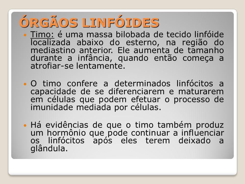 ÓRGÃOS LINFÓIDES Timo: é uma massa bilobada de tecido linfóide localizada abaixo do esterno, na região do mediastino anterior.