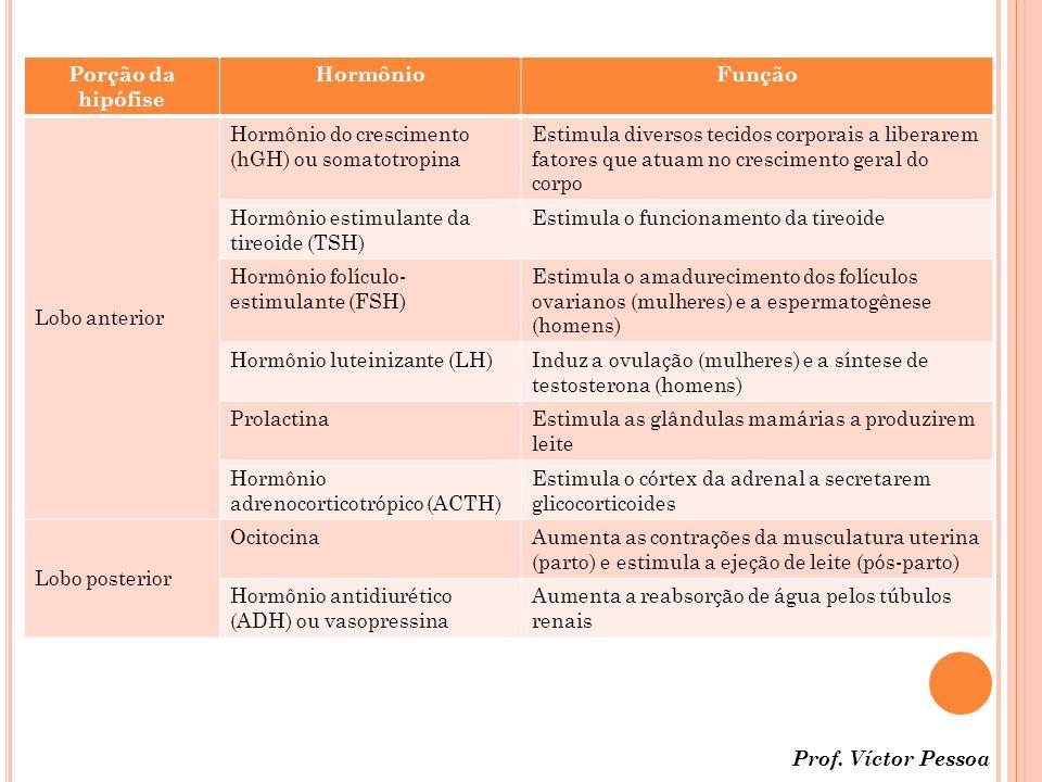 Porção da hipófise HormônioFunção Lobo anterior Hormônio do crescimento (hGH) ou somatotropina Estimula diversos tecidos corporais a liberarem fatores que atuam no crescimento geral do corpo Hormônio estimulante da tireoide (TSH) Estimula o funcionamento da tireoide Hormônio folículo- estimulante (FSH) Estimula o amadurecimento dos folículos ovarianos (mulheres) e a espermatogênese (homens) Hormônio luteinizante (LH)Induz a ovulação (mulheres) e a síntese de testosterona (homens) ProlactinaEstimula as glândulas mamárias a produzirem leite Hormônio adrenocorticotrópico (ACTH) Estimula o córtex da adrenal a secretarem glicocorticoides Lobo posterior OcitocinaAumenta as contrações da musculatura uterina (parto) e estimula a ejeção de leite (pós-parto) Hormônio antidiurético (ADH) ou vasopressina Aumenta a reabsorção de água pelos túbulos renais