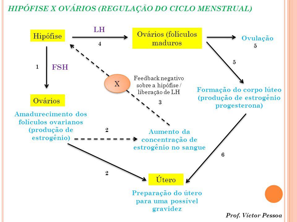 HIPÓFISE X OVÁRIOS (REGULAÇÃO DO CICLO MENSTRUAL) Hipófise Ovários FSH Amadurecimento dos folículos ovarianos (produção de estrogênio) Útero Preparação do útero para uma possível gravidez Aumento da concentração de estrogênio no sangue X X Feedback negativo sobre a hipófise / liberação de LH LH Ovários (folículos maduros Ovulação Formação do corpo lúteo (produção de estrogênio progesterona) 1 2 2 3 4 5 5 6