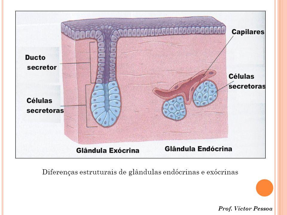 Prof. Víctor Pessoa Diferenças estruturais de glândulas endócrinas e exócrinas