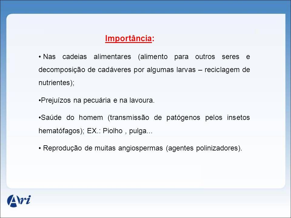 Importância: Nas cadeias alimentares (alimento para outros seres e decomposição de cadáveres por algumas larvas – reciclagem de nutrientes); Prejuízos