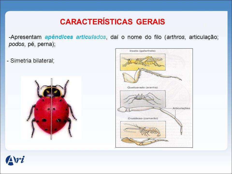 CARACTERÍSTICAS GERAIS CARACTERÍSTICAS GERAIS - Simetria bilateral; -Apresentam, daí o nome do filo (arthros, articulação; podos, pé, perna); -Apresen
