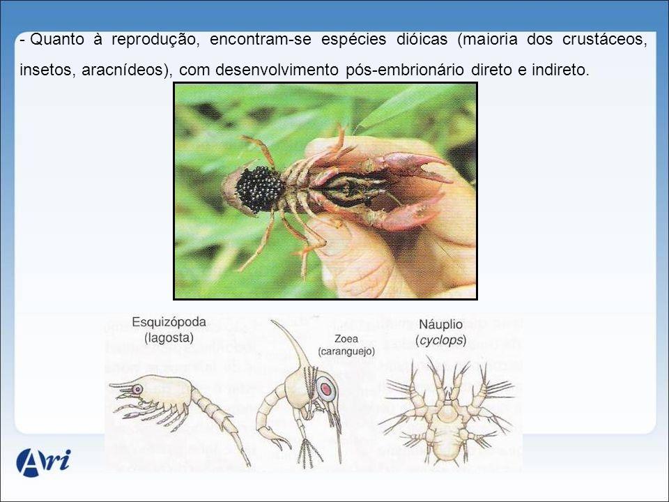 - Quanto à reprodução, encontram-se espécies dióicas (maioria dos crustáceos, insetos, aracnídeos), com desenvolvimento pós-embrionário direto e indir