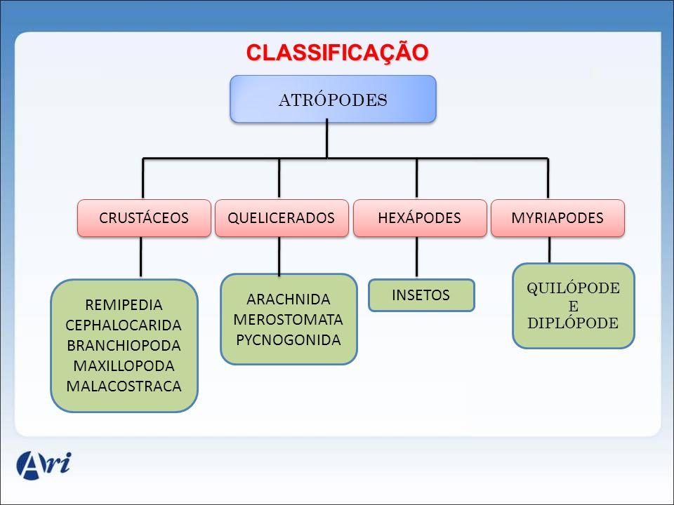 CLASSIFICAÇÃO ATRÓPODES CRUSTÁCEOS ARACHNIDA MEROSTOMATA PYCNOGONIDA INSETOS QUELICERADOS HEXÁPODES MYRIAPODES QUILÓPODE E DIPLÓPODE REMIPEDIA CEPHALO