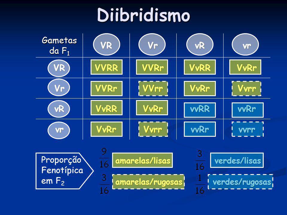 Diibridismo amarelas/lisas verdes/lisas amarelas/lisas verdes/lisas amarelas/rugosas verdes/rugosas amarelas/rugosas verdes/rugosas Gametas da F 1 VRV