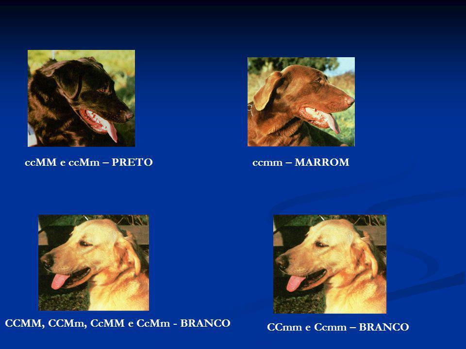 ccMM e ccMm – PRETOccmm – MARROM CCMM, CCMm, CcMM e CcMm - BRANCO CCmm e Ccmm – BRANCO