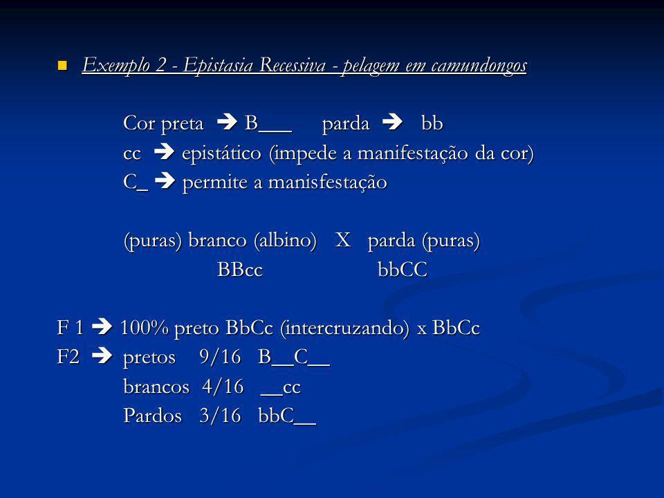 Exemplo 2 - Epistasia Recessiva - pelagem em camundongos Exemplo 2 - Epistasia Recessiva - pelagem em camundongos Cor preta B___parda bb cc epistático