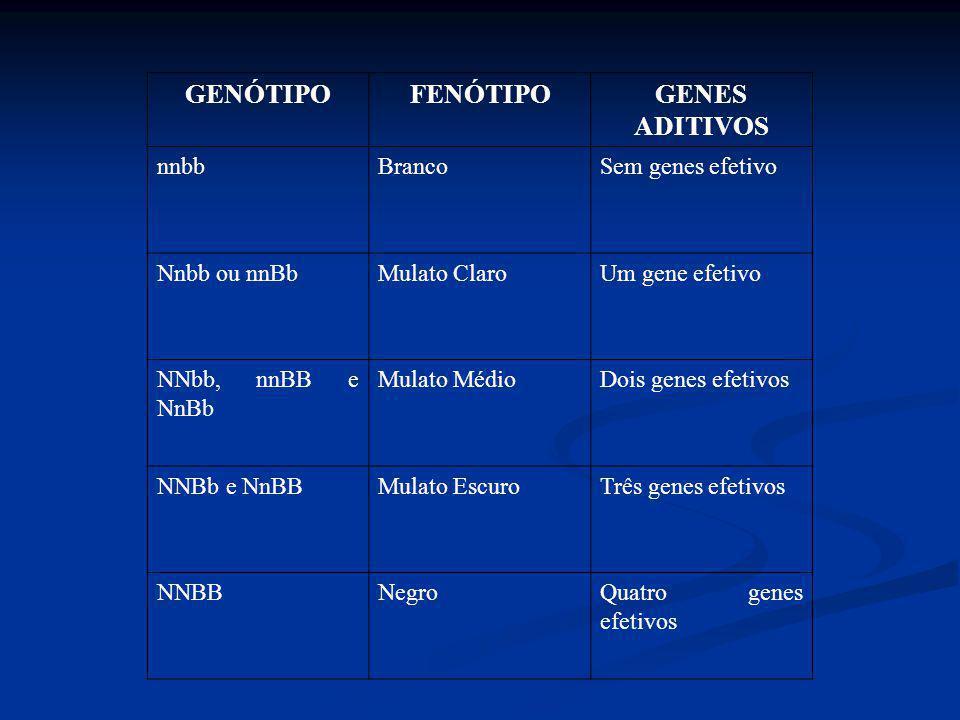 GENÓTIPOFENÓTIPOGENES ADITIVOS nnbbBrancoSem genes efetivo Nnbb ou nnBbMulato ClaroUm gene efetivo NNbb, nnBB e NnBb Mulato MédioDois genes efetivos N