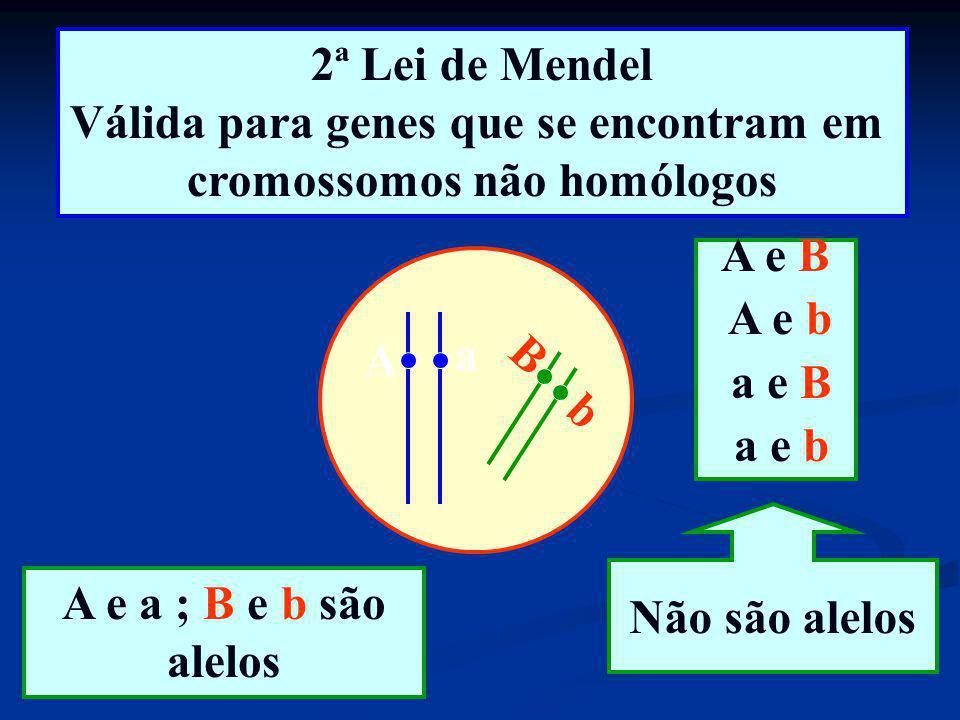 2ª Lei de Mendel Válida para genes que se encontram em cromossomos não homólogos A a b B A e a ; B e b são alelos A e B A e b a e B a e b Não são alel
