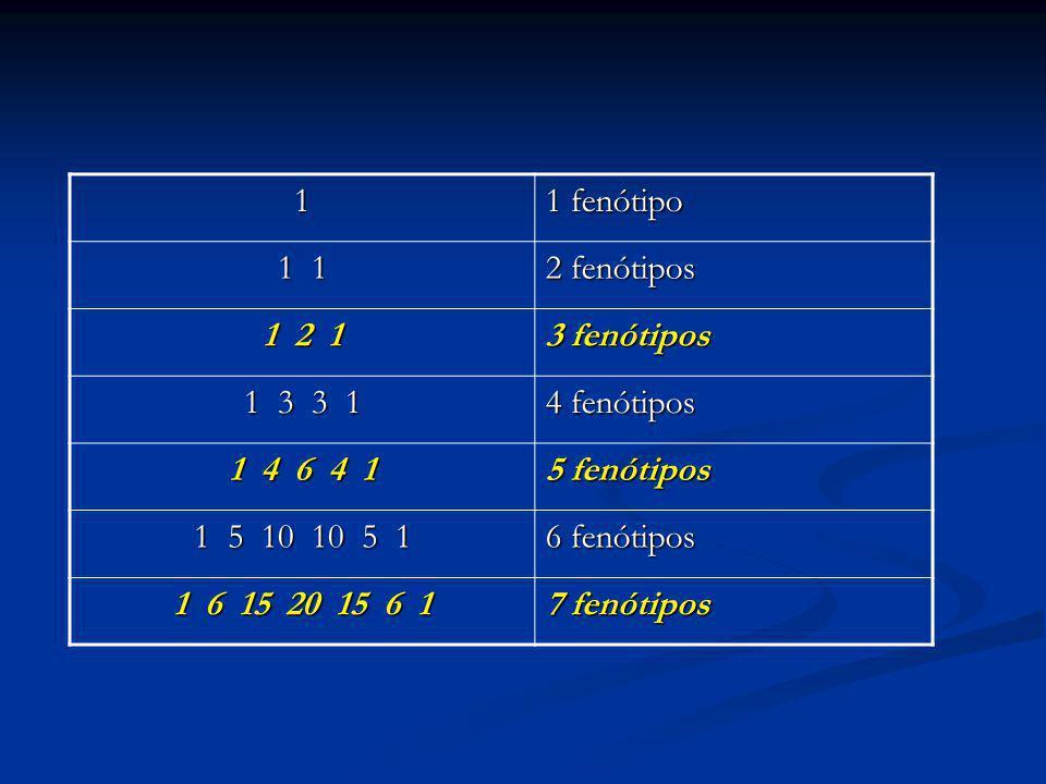 1 1 fenótipo 1 1 2 fenótipos 1 2 1 3 fenótipos 1 3 3 1 4 fenótipos 1 4 6 4 1 5 fenótipos 1 5 10 10 5 1 6 fenótipos 1 6 15 20 15 6 1 7 fenótipos