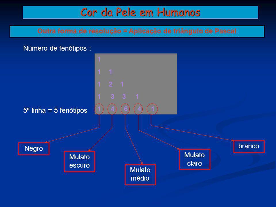 Cor da Pele em Humanos Outra forma de resolução = Aplicação de triângulo de Pascal 1 1 2 1 1 3 3 1 1 4 6 4 1 Número de fenótipos : 5ª linha = 5 fenóti
