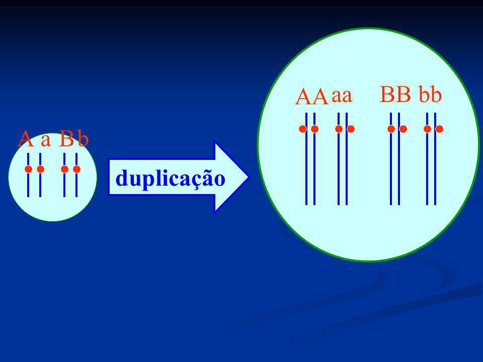 Exemplo Clássico 1: cor de pele Exemplo Clássico 1: cor de pele mmbb branco (quantidade mínima de melanina) Mmbb / mmBb mulato claro (efeito acrescentador de + 1 gene) MmBb / MMbb / mmBB mulato médio (efeito acrescentador de 2 gene) MMBb / MmBB mulato escuro (efeito acrescentador de + 3 gene) MMBB negro (efeito acrescentador de + 4 (todos) genes)
