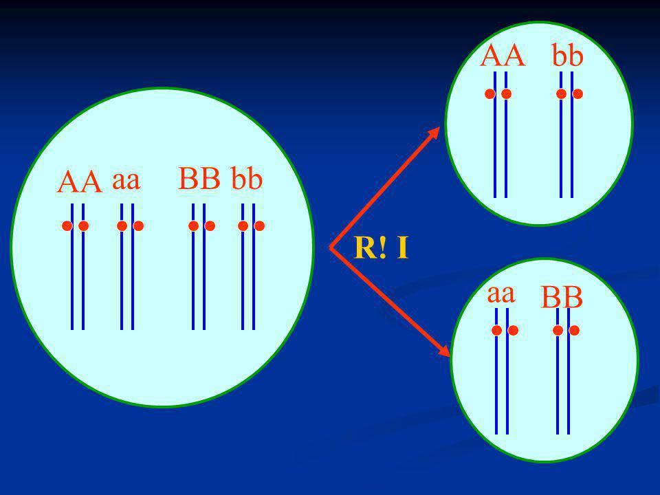 Exemplo 2 - Forma do fruto da abóbora Exemplo 2 - Forma do fruto da abóbora discóideA__B__alongadaaabb discóideA__B__alongadaaabb esférica A__bb ou aaB__ esférica A__bb ou aaB__ (puras) esférica X esférica (puras) AAbb aaBB F 1 100% discóide AaBb (intercruzando) x AaBb F2 discóide9/16: A_B_ esférica 6/16: A_bb ou aaB_ alongado 1/16: aabb