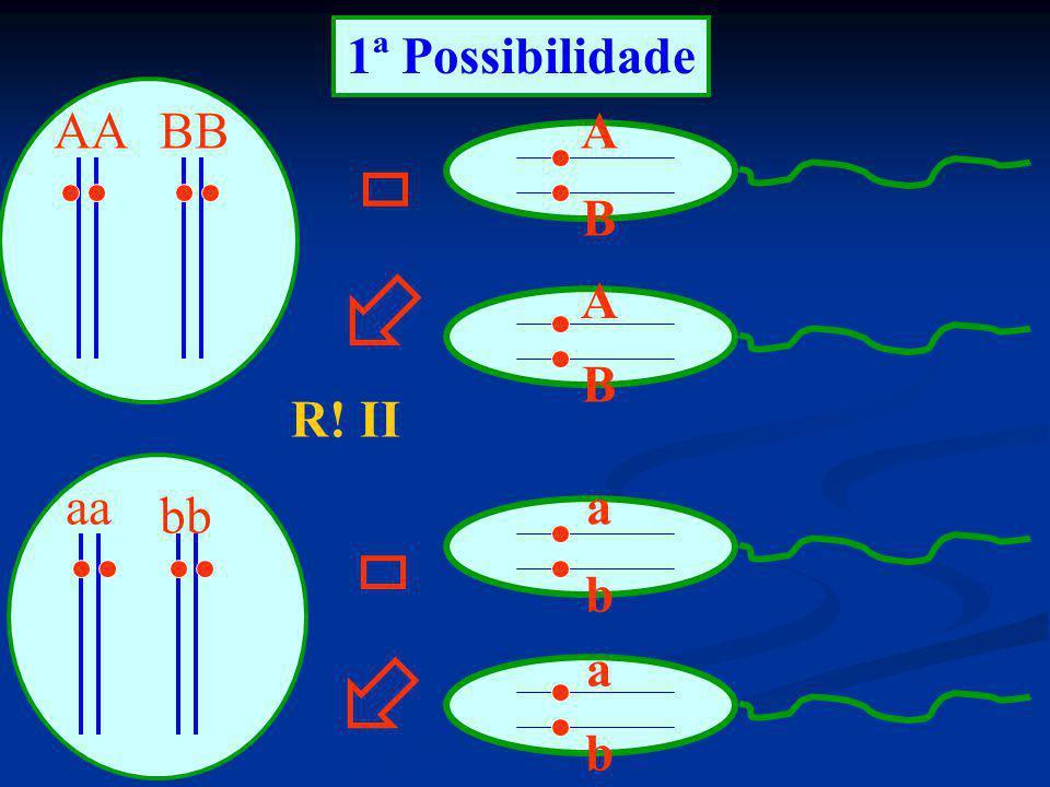 1ª Possibilidade AA aa BB bb A B B A a b R! II a b