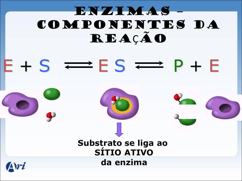 ENZIMAS – COMPONENTES DA REA Ç ÃO E + S E S P + E Substrato se liga ao SÍTIO ATIVO da enzima