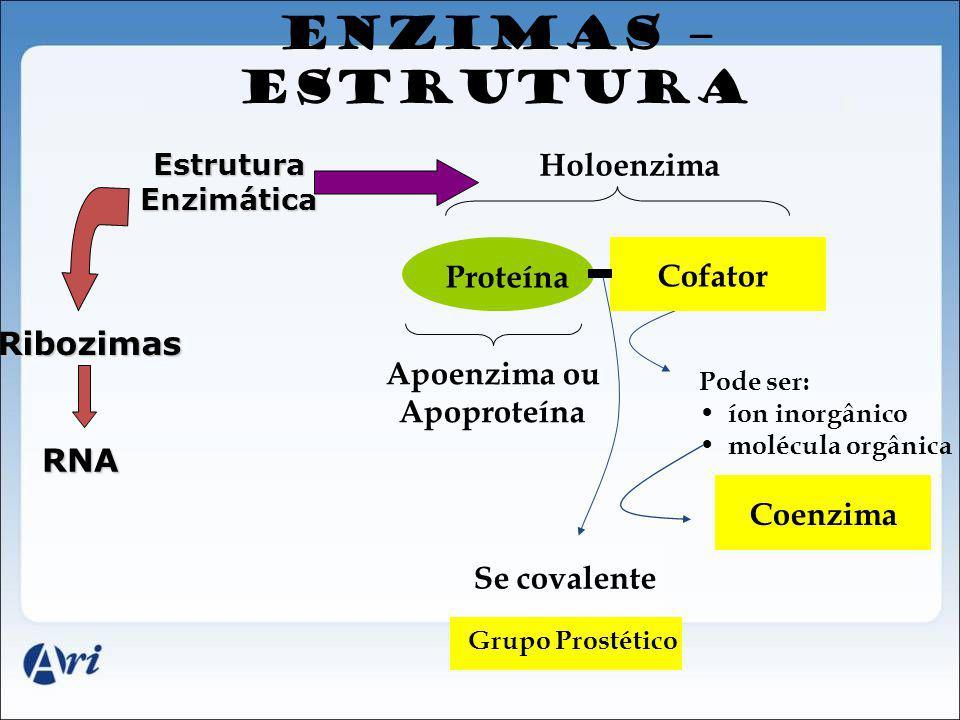 ENZIMAS – ESTRUTURA RNA EstruturaEnzimática Ribozimas Se covalente Apoenzima ou Apoproteína Grupo Prostético Holoenzima Cofator Coenzima Proteína Pode