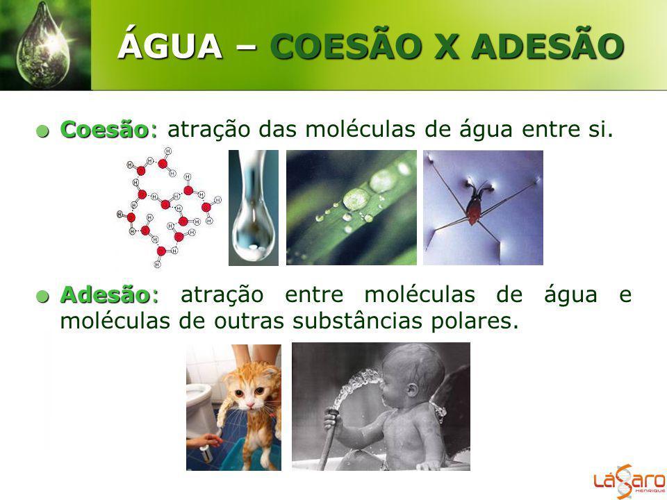 ÁGUA – COESÃO X ADESÃO Coesão: Coesão: atração das moléculas de água entre si. Adesão: Adesão: atração entre moléculas de água e moléculas de outras s