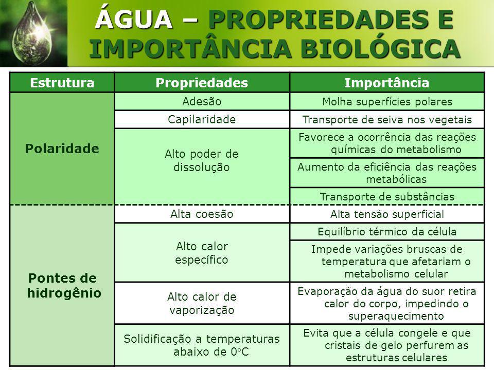 www.bioloja.com ÁGUA – PROPRIEDADES E IMPORTÂNCIA BIOLÓGICA EstruturaPropriedadesImportância Polaridade Adesão Molha superfícies polares Capilaridade