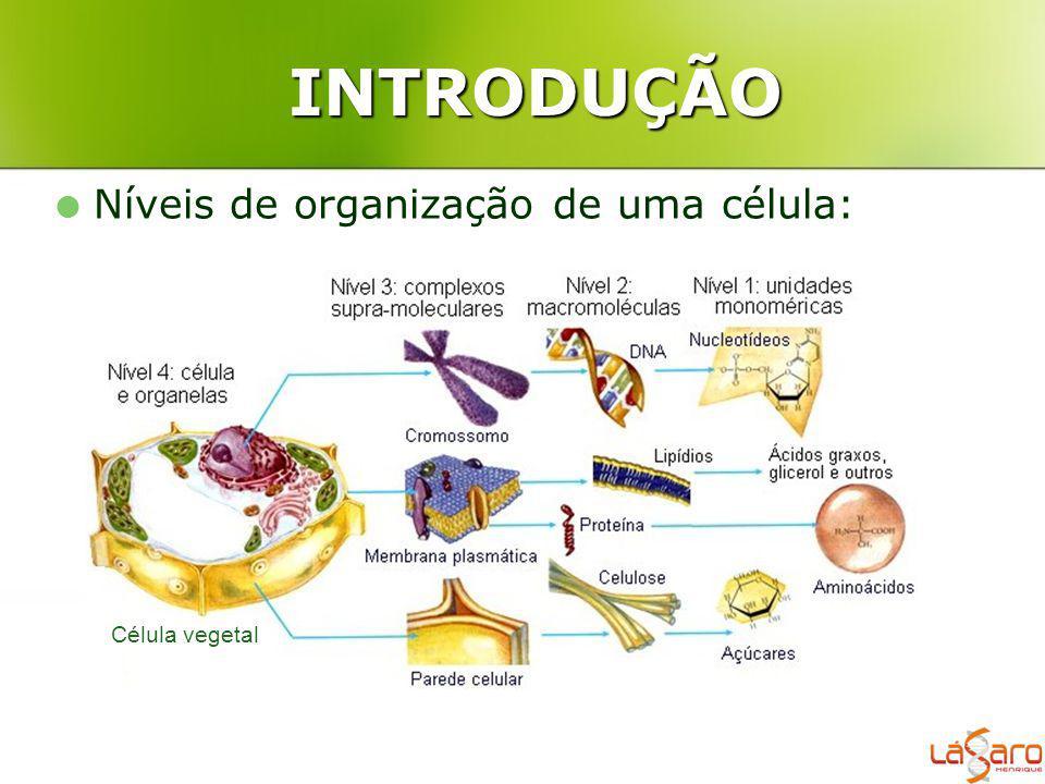 INTRODUÇÃO Níveis de organização de uma célula: Célula vegetal