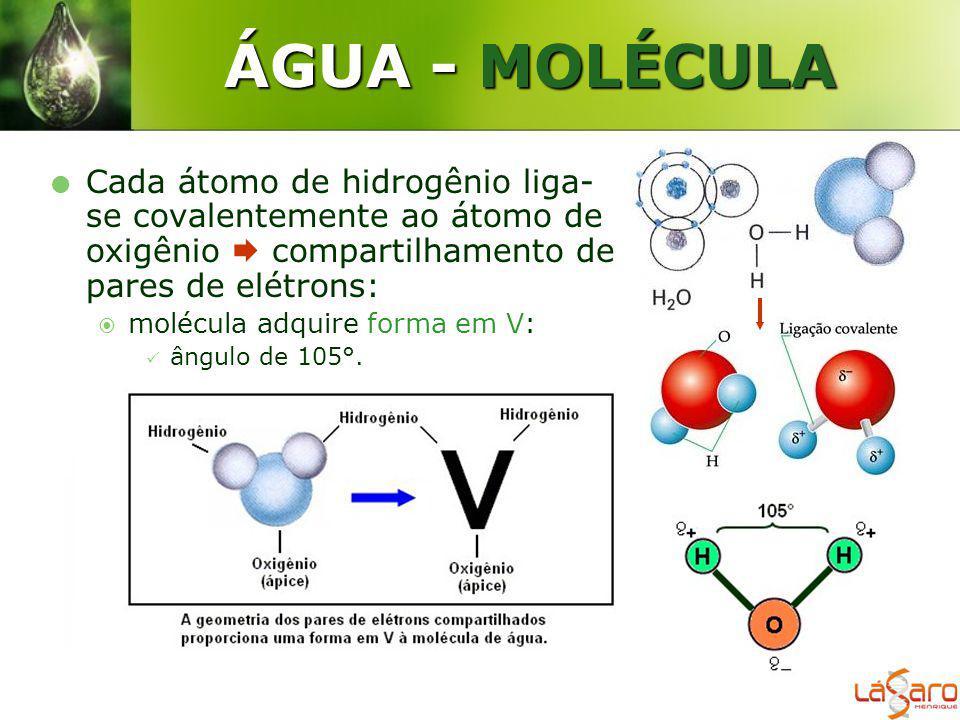 ÁGUA - MOLÉCULA Cada átomo de hidrogênio liga- se covalentemente ao átomo de oxigênio compartilhamento de pares de elétrons: molécula adquire forma em