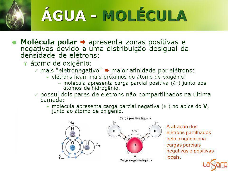 ÁGUA - MOLÉCULA Molécula polar apresenta zonas positivas e negativas devido a uma distribuição desigual da densidade de elétrons: átomo de oxigênio: m
