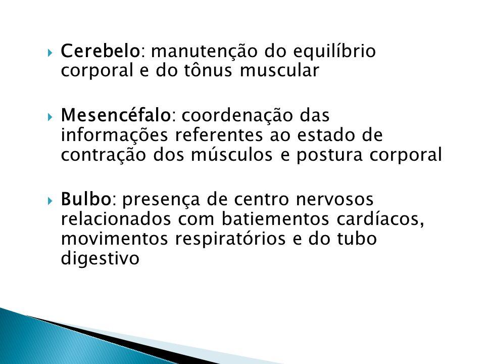 Cerebelo: manutenção do equilíbrio corporal e do tônus muscular Mesencéfalo: coordenação das informações referentes ao estado de contração dos músculo