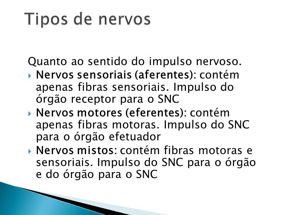 Quanto ao sentido do impulso nervoso. Nervos sensoriais (aferentes): contém apenas fibras sensoriais. Impulso do órgão receptor para o SNC Nervos moto
