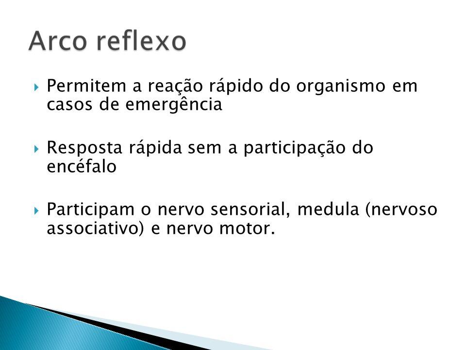 Permitem a reação rápido do organismo em casos de emergência Resposta rápida sem a participação do encéfalo Participam o nervo sensorial, medula (nerv