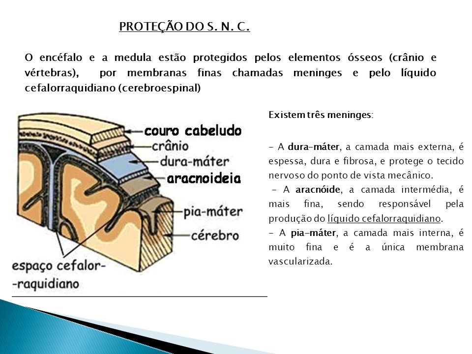 PROTEÇÃO DO S.N. C.