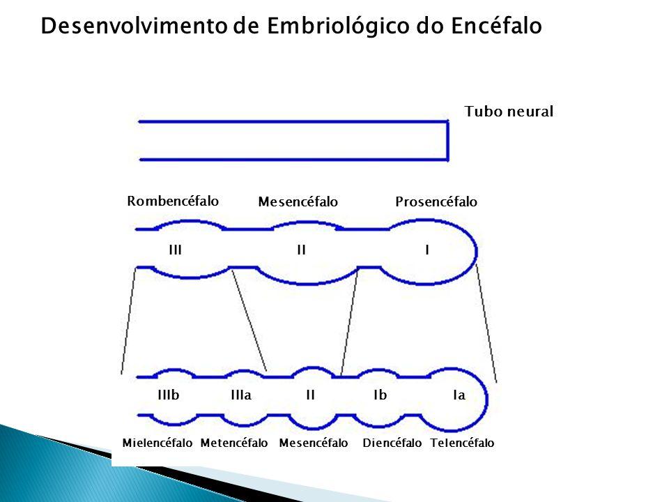 Desenvolvimento de Embriológico do Encéfalo Tubo neural Rombencéfalo MesencéfaloProsencéfalo IIIIII IaIbIIIIIaIIIb MielencéfaloMetencéfaloMesencéfaloT
