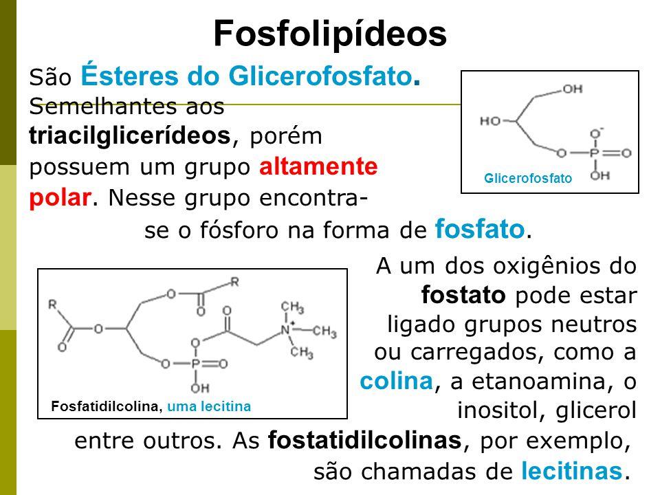Fosfolipídeos Glicerofosfato A um dos oxigênios do fostato pode estar ligado grupos neutros ou carregados, como a colina, a etanoamina, o inositol, glicerol entre outros.