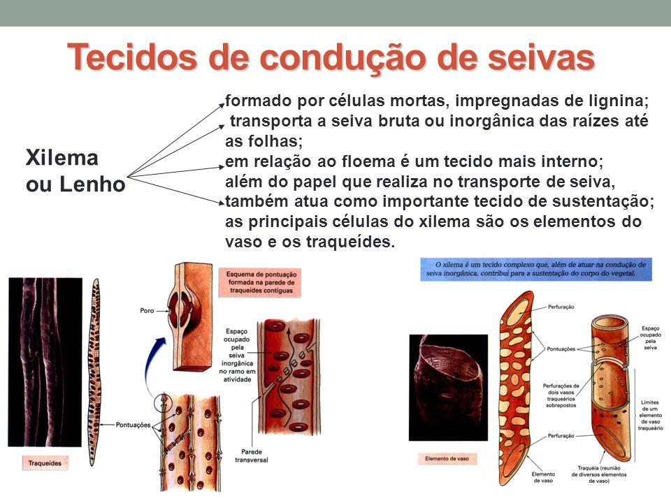 Tecidos de condução de seivas Xilema ou Lenho formado por células mortas, impregnadas de lignina; transporta a seiva bruta ou inorgânica das raízes at