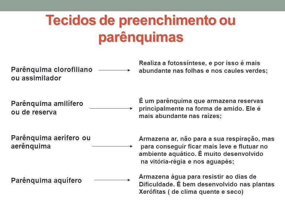 Tecidos de preenchimento ou parênquimas Parênquima clorofiliano ou assimilador Parênquima amilífero ou de reserva Parênquima aerífero ou aerênquima Pa