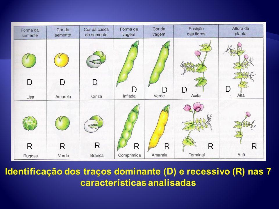 Identificação dos traços dominante (D) e recessivo (R) nas 7 características analisadas D R D D D DD D R R RRRR