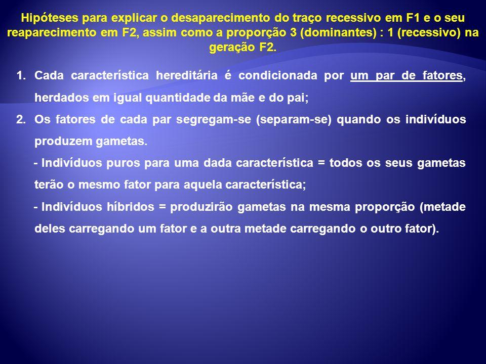 Hipóteses para explicar o desaparecimento do traço recessivo em F1 e o seu reaparecimento em F2, assim como a proporção 3 (dominantes) : 1 (recessivo)
