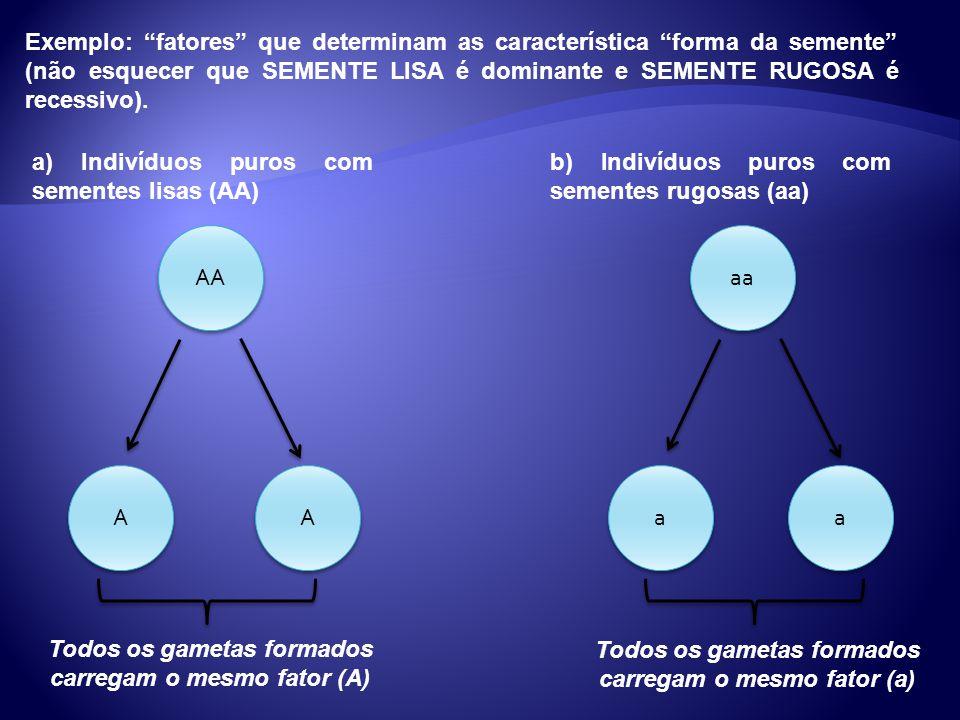 Exemplo: fatores que determinam as característica forma da semente (não esquecer que SEMENTE LISA é dominante e SEMENTE RUGOSA é recessivo). a) Indiví