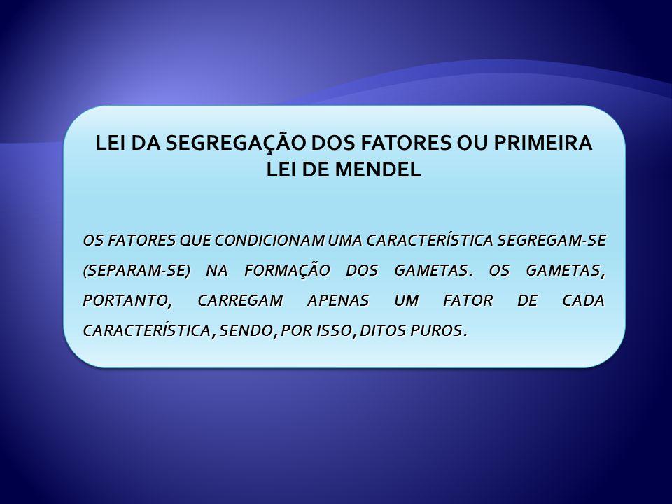 LEI DA SEGREGAÇÃO DOS FATORES OU PRIMEIRA LEI DE MENDEL OS FATORES QUE CONDICIONAM UMA CARACTERÍSTICA SEGREGAM-SE (SEPARAM-SE) NA FORMAÇÃO DOS GAMETAS