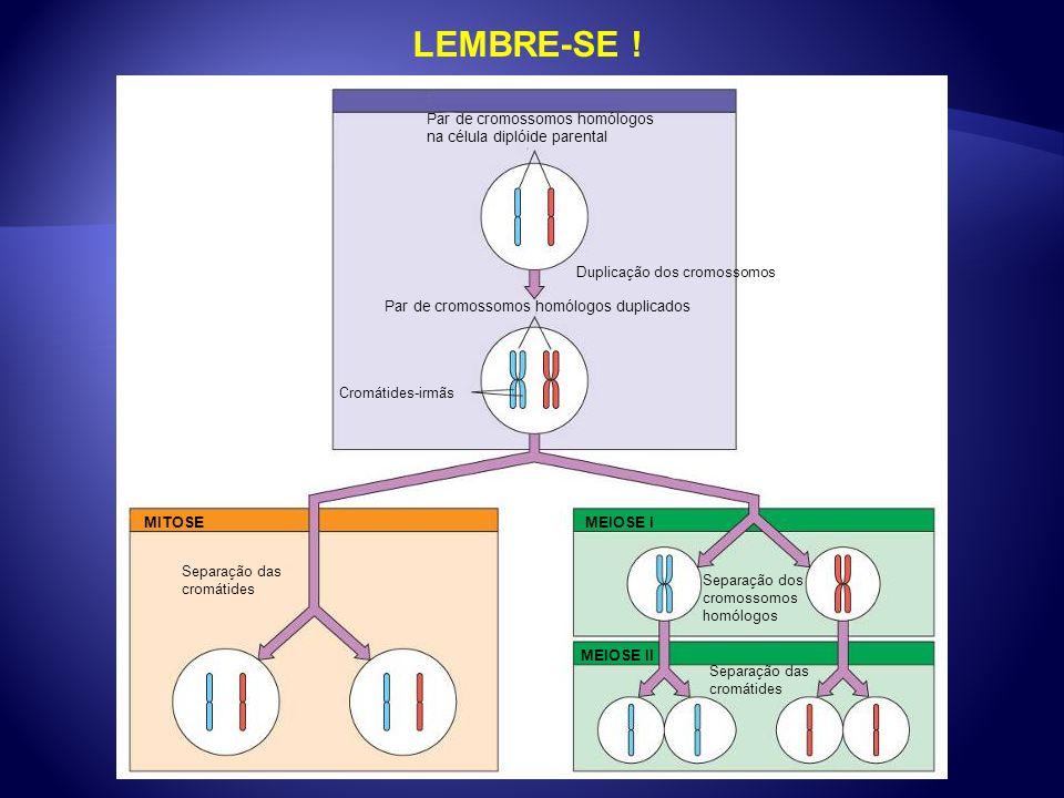 LEMBRE-SE ! Par de cromossomos homólogos na célula diplóide parental Duplicação dos cromossomos Par de cromossomos homólogos duplicados Cromátides-irm