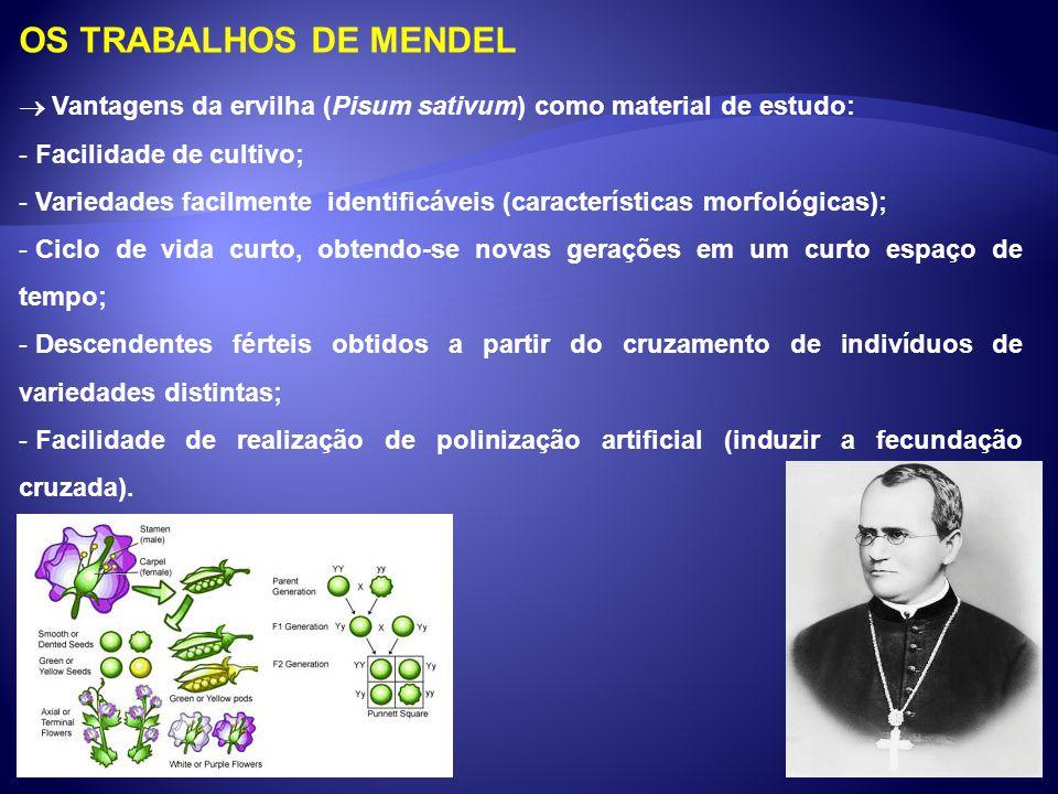 OS TRABALHOS DE MENDEL Vantagens da ervilha (Pisum sativum) como material de estudo: - Facilidade de cultivo; - Variedades facilmente identificáveis (