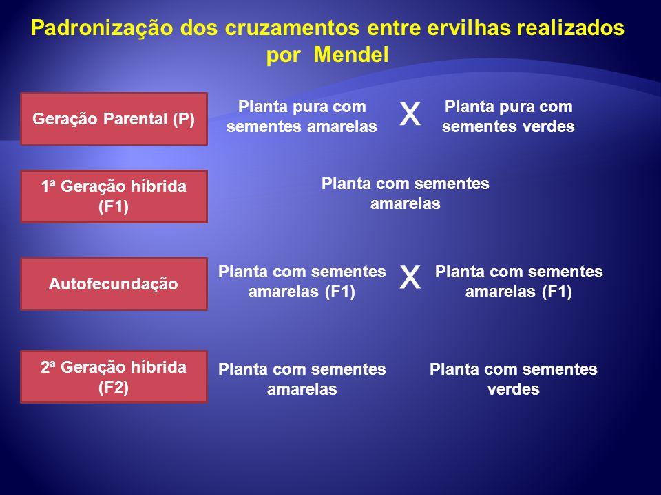Padronização dos cruzamentos entre ervilhas realizados por Mendel Geração Parental (P) 1ª Geração híbrida (F1) Autofecundação Planta pura com sementes