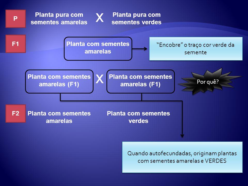 Planta pura com sementes amarelas Planta pura com sementes verdes x Planta com sementes amarelas Planta com sementes amarelas (F1) x Planta com sement