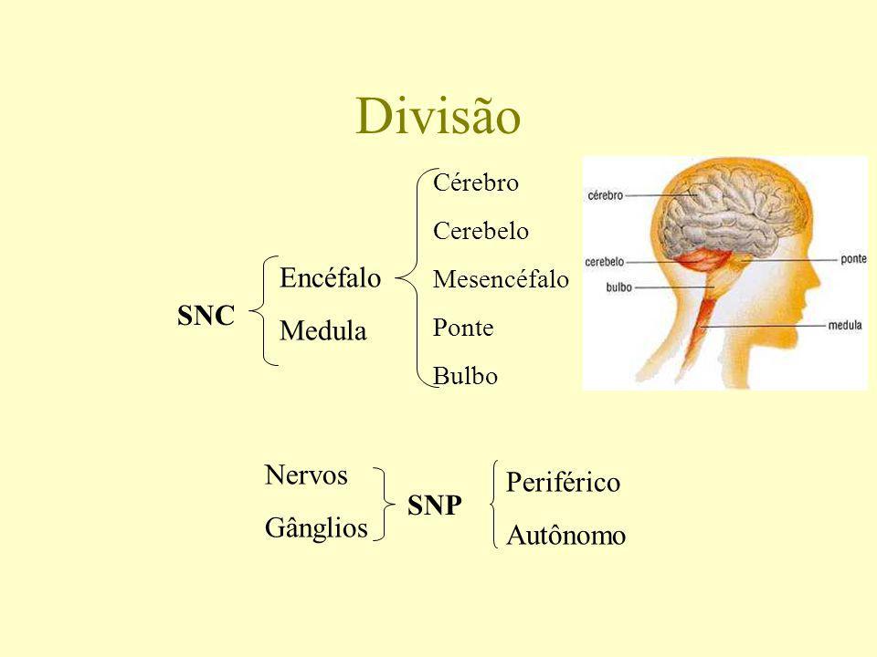 Sistema Nervoso Função: ajustar o organismo animal ao ambiente. Perceber e identificar as condições ambientais externas e as condições internas do org