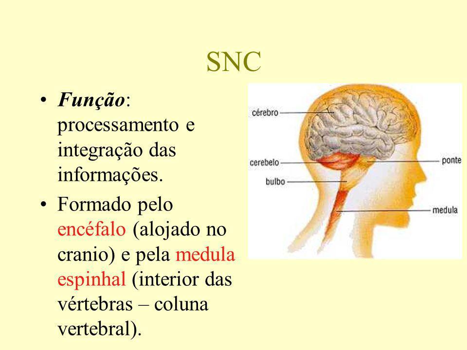 DILATA CONTRAE (-) SECREÇÃO (+) SECREÇÃO DILATA BRONQUÍOLOS CONTRAE BRONQUÍOLOS AUMENTA BATIMENTOS DIMINUE BATIMENTOS SECRETA ADRENALINA DIMINUE SECREÇÃO AUMENTA SECREÇÃO DIMINUE MOTILIDADE AUMENTA MOTILIDADE RETÉM CONTEÚ- DO CÓLON ESVAZIA O CÓLON RETARDA O ESVAZIAMENTO ESVAZIA A BEXIGA S I M P Á T I C O P A R A S I M P Á T I C O