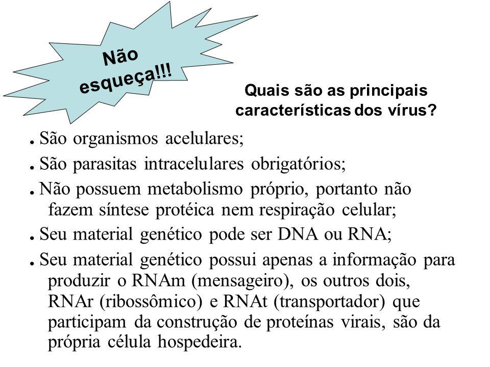 Quais são as principais características dos vírus?. São organismos acelulares;. São parasitas intracelulares obrigatórios;. Não possuem metabolismo pr