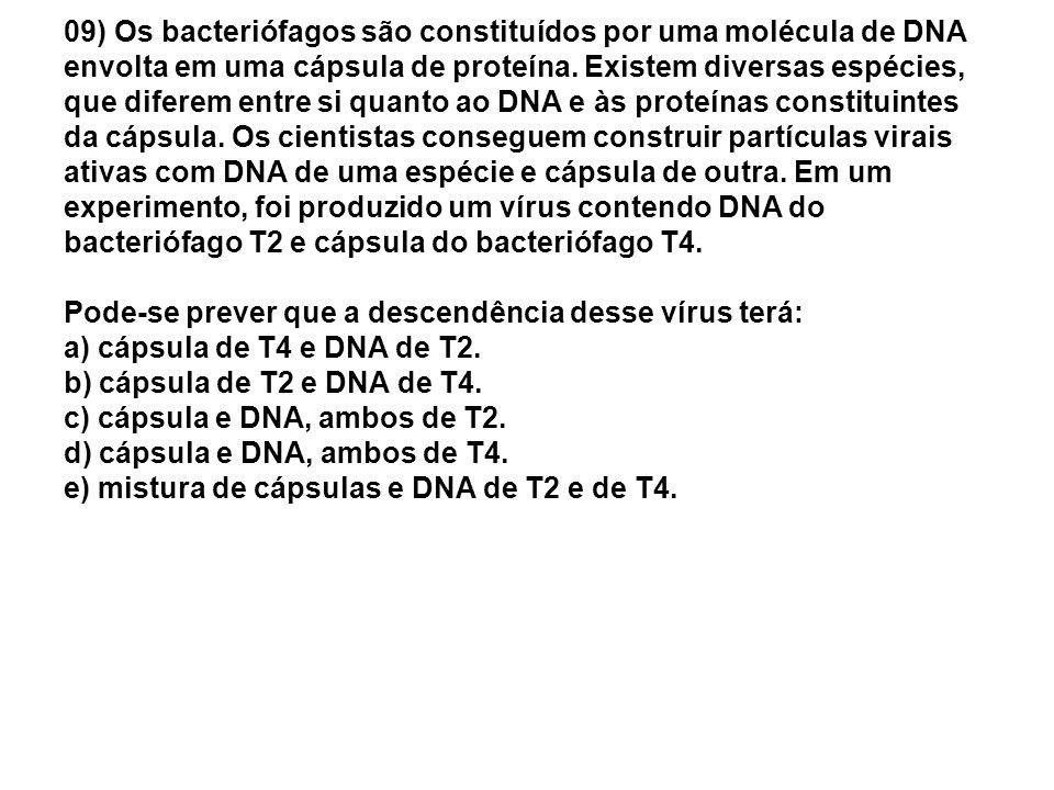 09) Os bacteriófagos são constituídos por uma molécula de DNA envolta em uma cápsula de proteína. Existem diversas espécies, que diferem entre si quan
