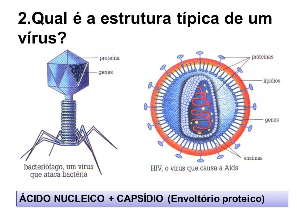 2.Qual é a estrutura típica de um vírus? ÁCIDO NUCLEICO + CAPSÍDIO (Envoltório proteico)