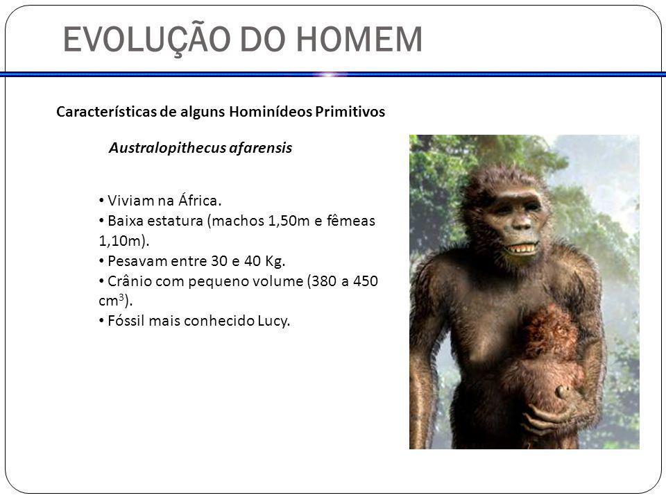 EVOLUÇÃO DO HOMEM Características de alguns Hominídeos Primitivos Australopithecus afarensis Viviam na África. Baixa estatura (machos 1,50m e fêmeas 1