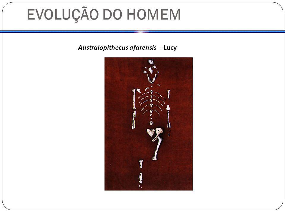 EVOLUÇÃO DO HOMEM Australopithecus afarensis - Lucy